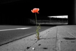 adversityflower-e1363898286935